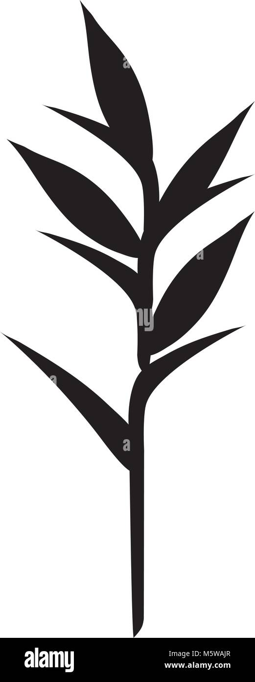 tropical and exotic heliconia vector illustration design Stock Vector