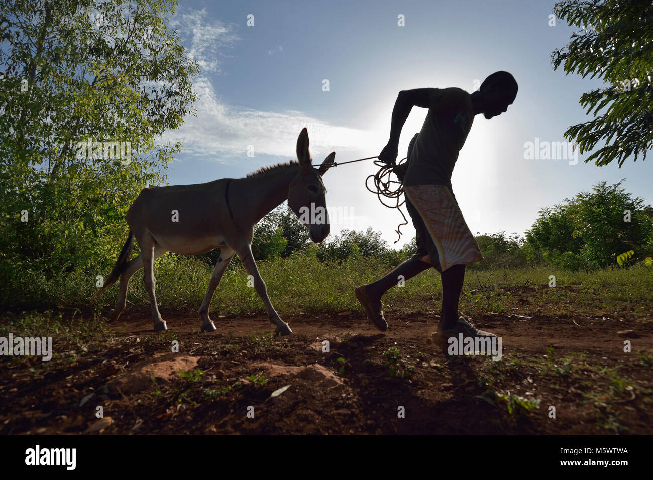 Lovius Joseph pulls a donkey in Picmy, a village on the Haitian island of La Gonave. - Stock Image