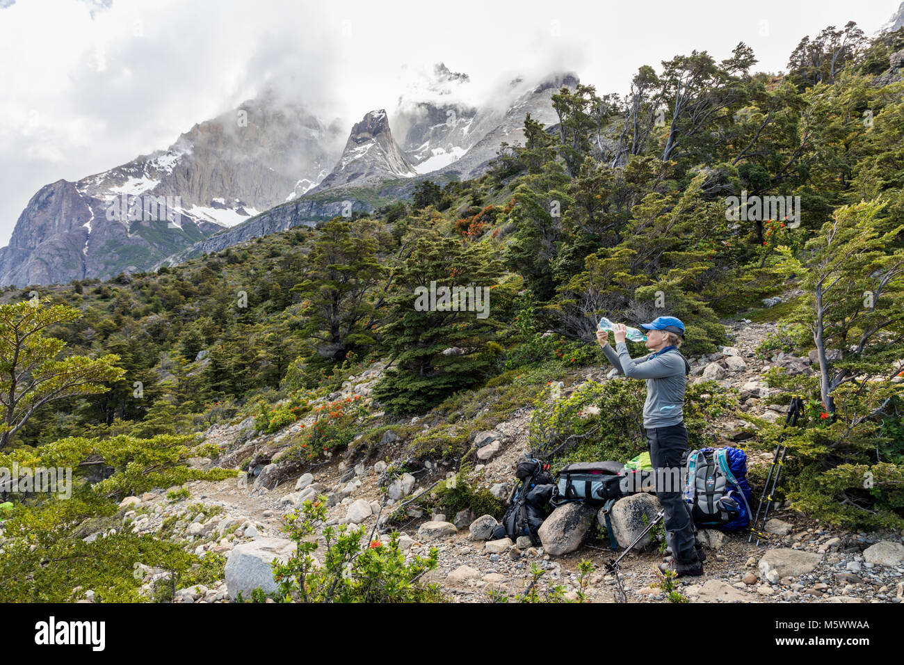 Female trekker pauses for drink of water; Cordillera Paine beyond; Torres del Paine National Park; Chile - Stock Image