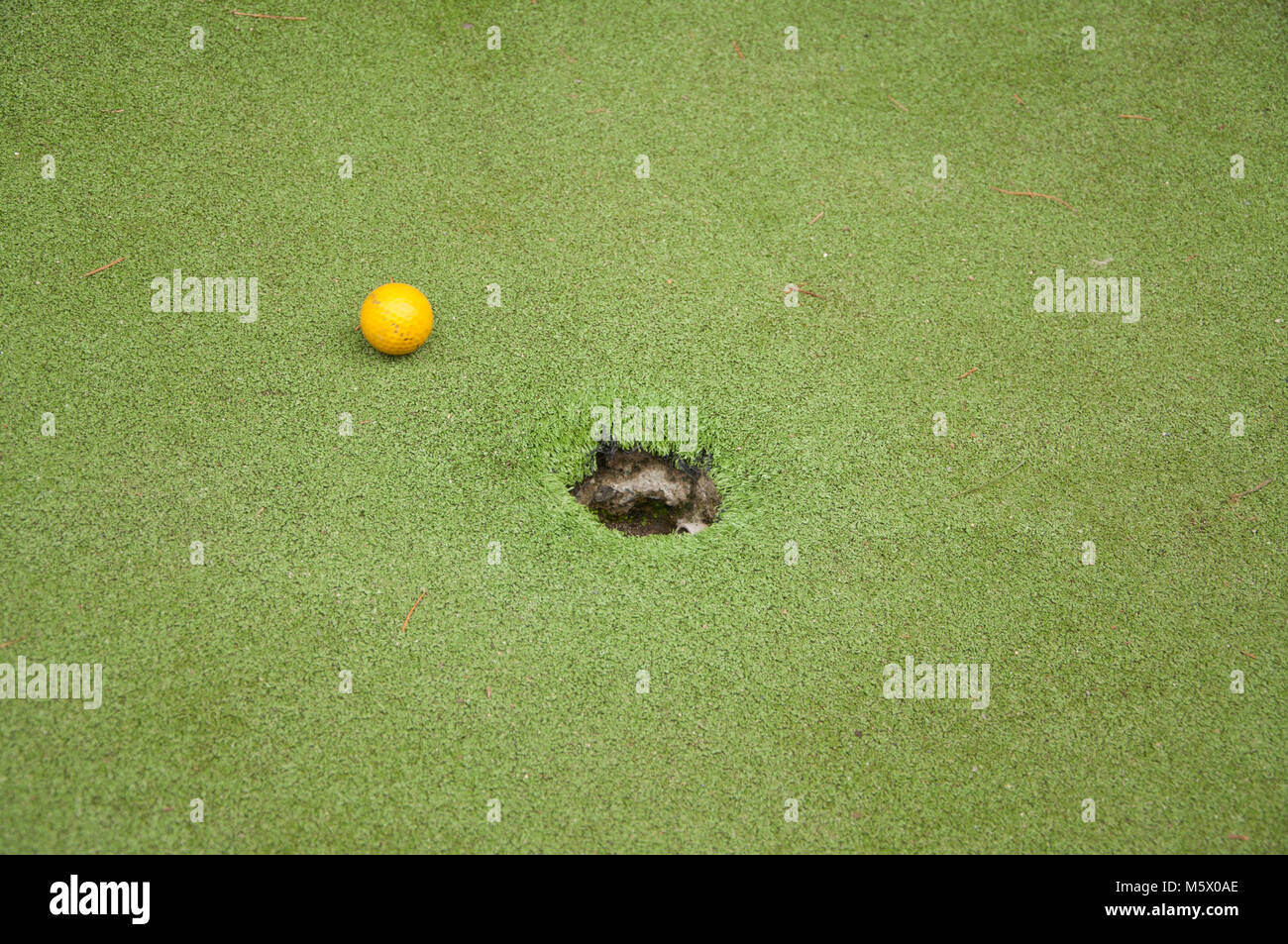 Yellow Golf Ball On A Golf Green - Stock Image