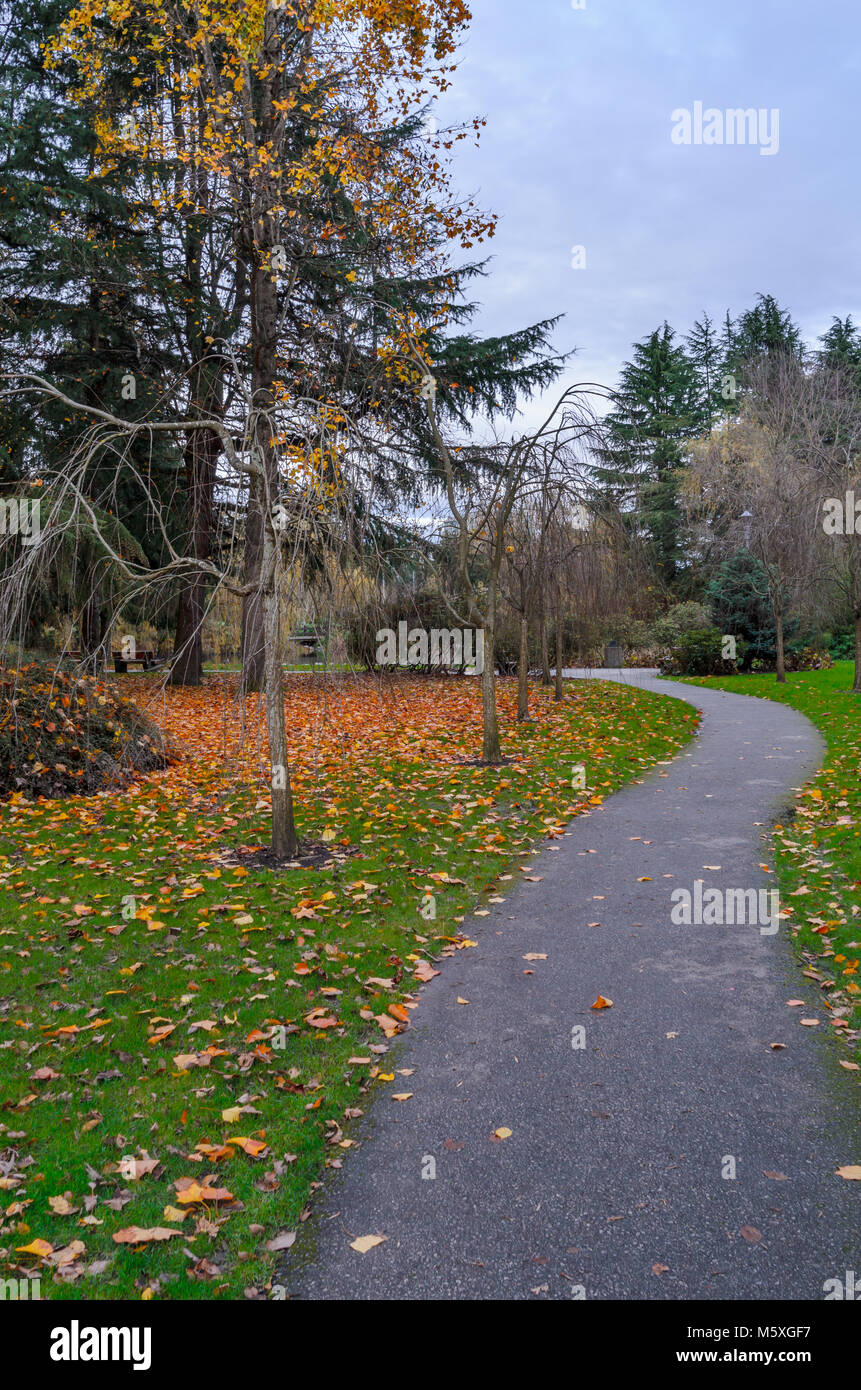 asphalt pedestrian path in an autumn city park with red and yellow fallen leaves on green grass, bare trees and - Stock Image