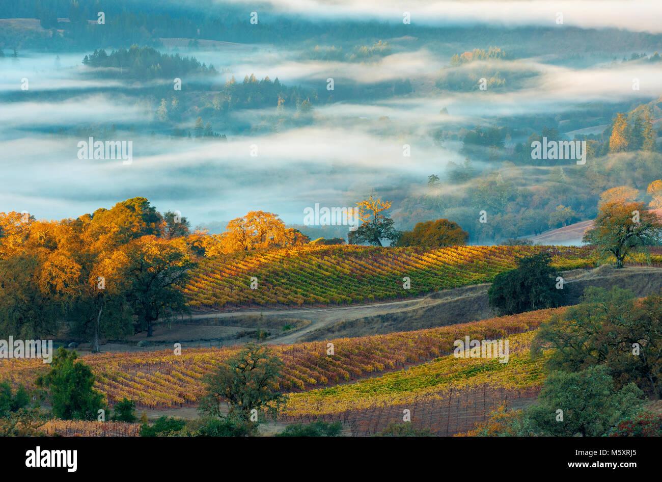 Sunrise, Marietta Vineyards, Yorkville Highlands, Mendocino County, California - Stock Image