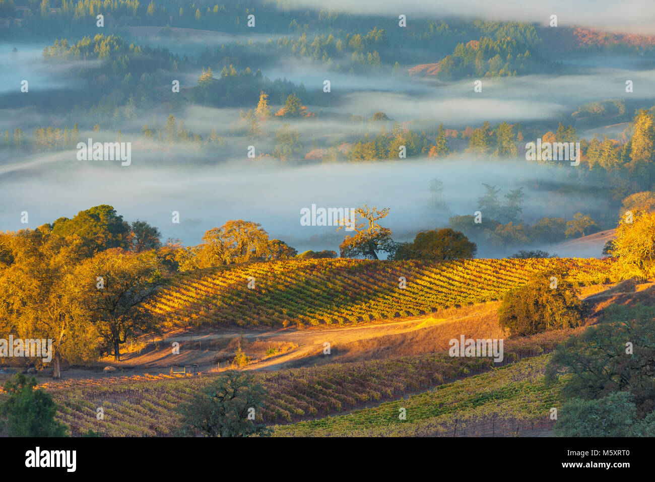 Sunrise, Marietta Vineyards, Yorkville Highlands, Mendocino County, California - Stock Image