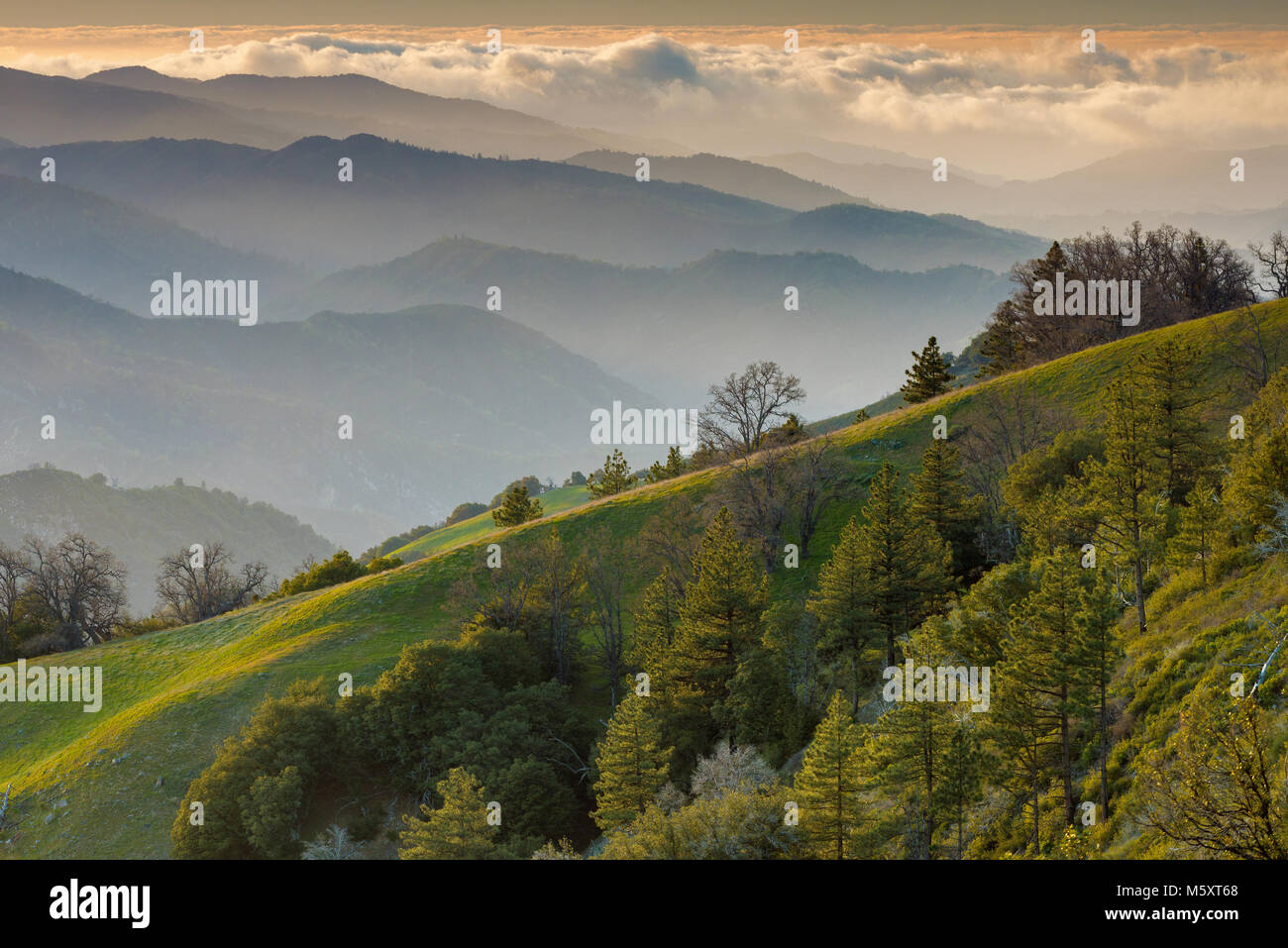 Last Light, Ventana Wilderness, Los Padres National Forest, Big Sur, Monterey County, California - Stock Image