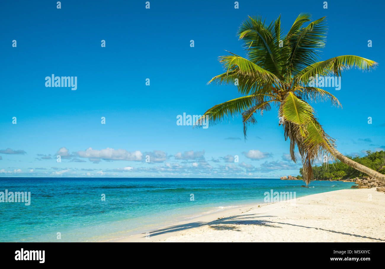 Tropical island beach. Perfect vacation background. - Stock Image