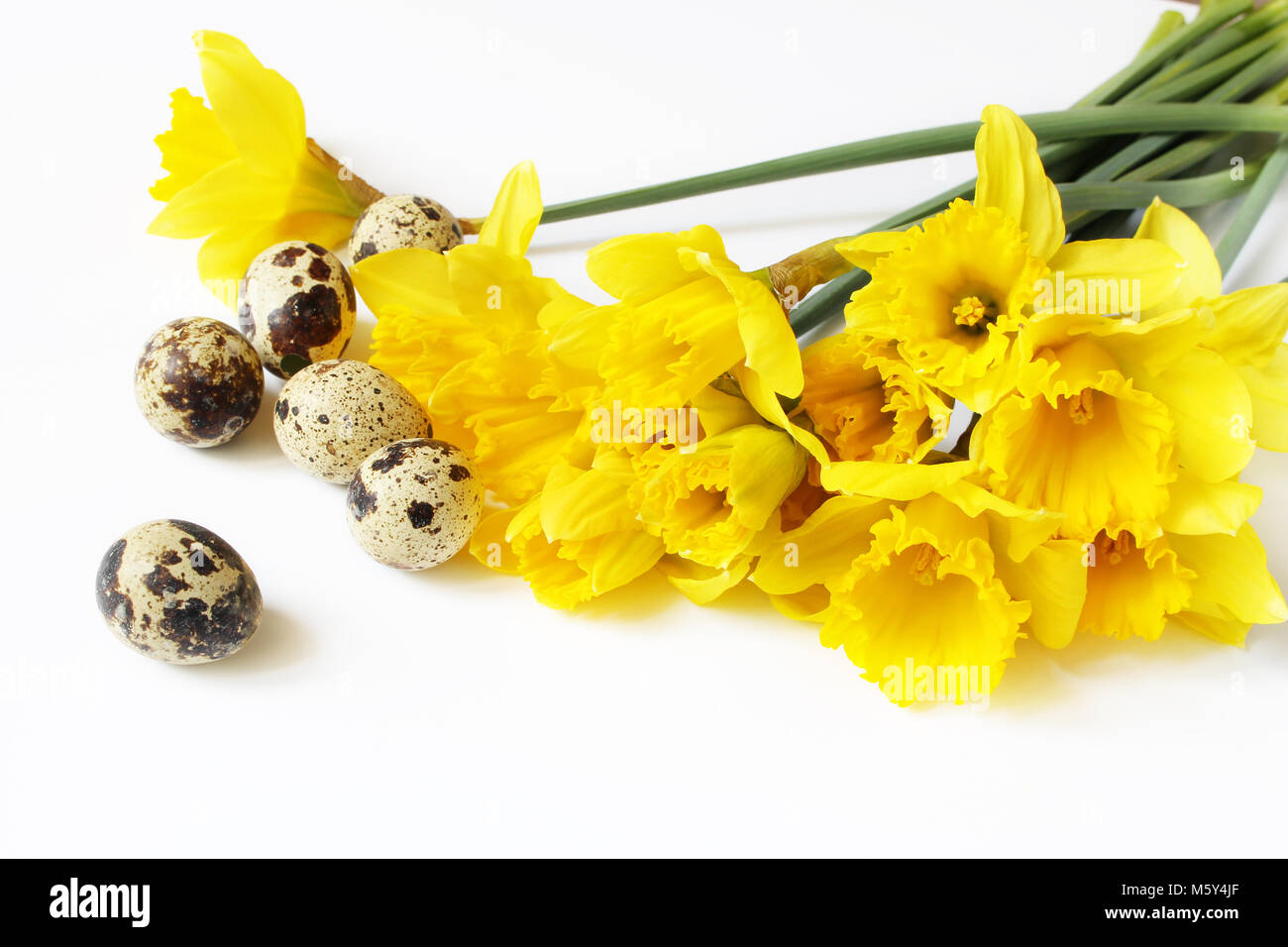 Easter, spring greeting card, invitation with quail eggs and yellow daffodils, narcissus flowers lying on white table. Feminine styled stock photo, floral composition. Stock Photo