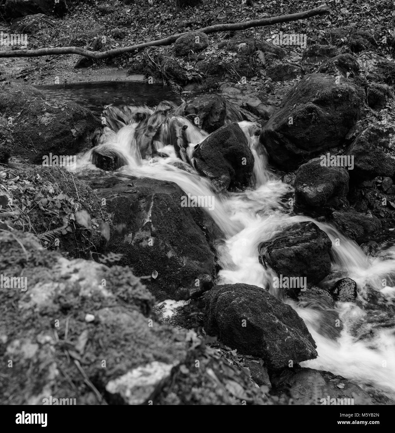 Monochrome outdoor long exposure of a small stream / creek in winter / fall forest with stones,trees,moss,autumnal - Stock Image