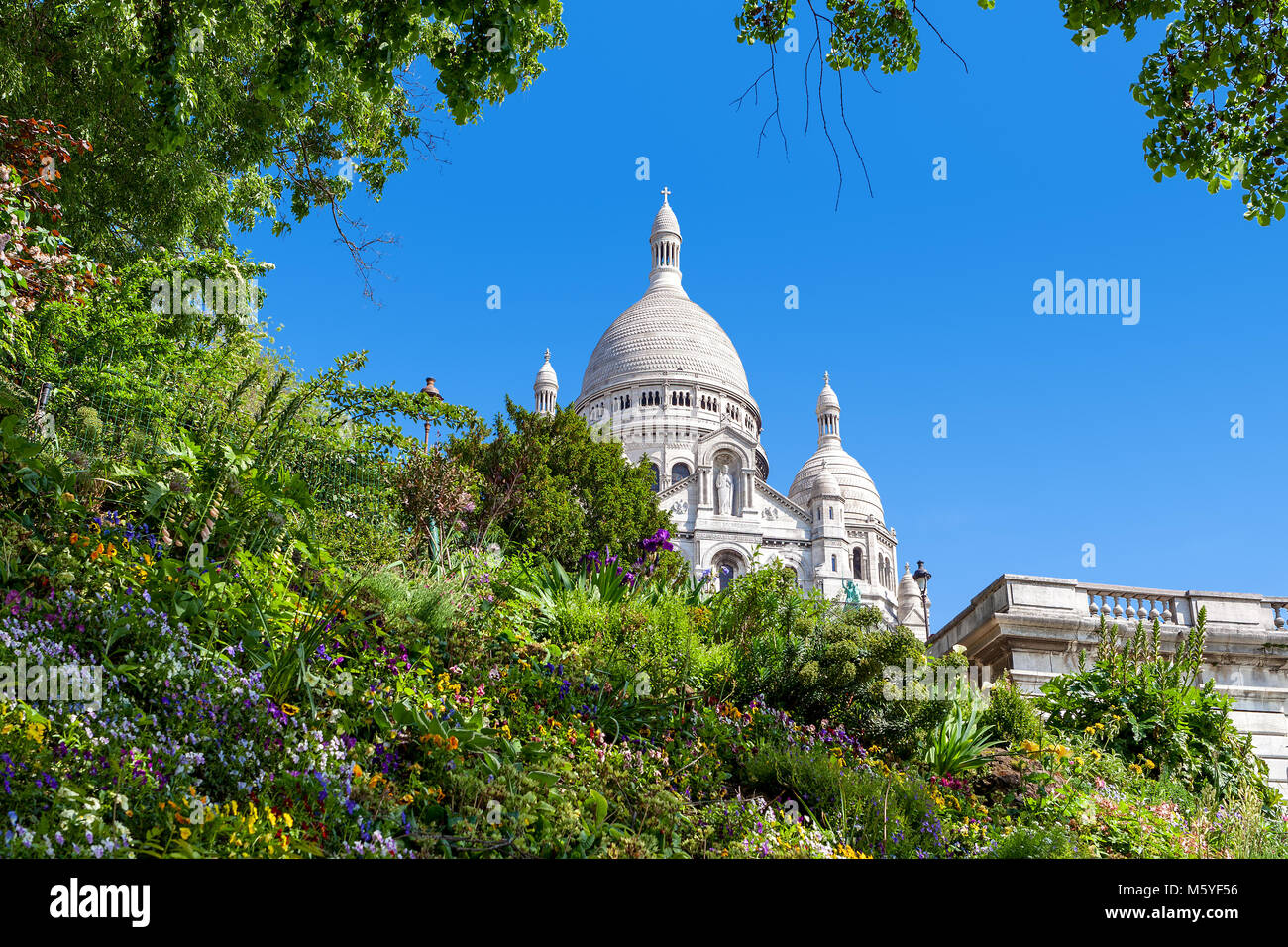 Green flowerbed with flowers as famous Sacre-Coeur Basilica on background under blue sky in Paris, France. - Stock Image