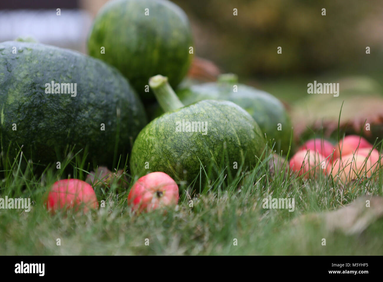 Harvest of an agricultural farm of a country house Stock Photo
