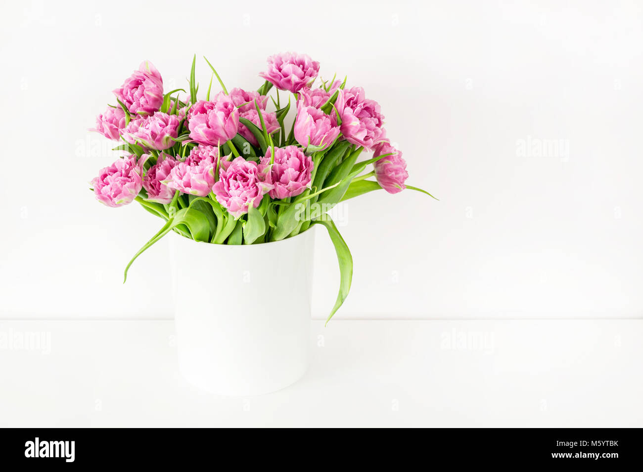 Bouquet of pink tulips in bucket. Fresh spring easter flower. White background , copy space - Stock Image