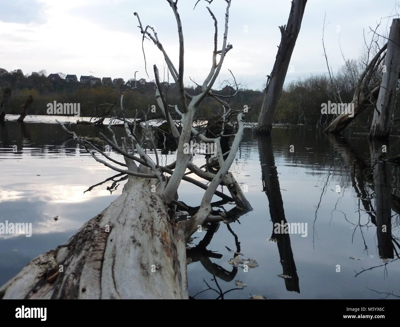 Fallen tree in lake .. A dying ember - Stock Image