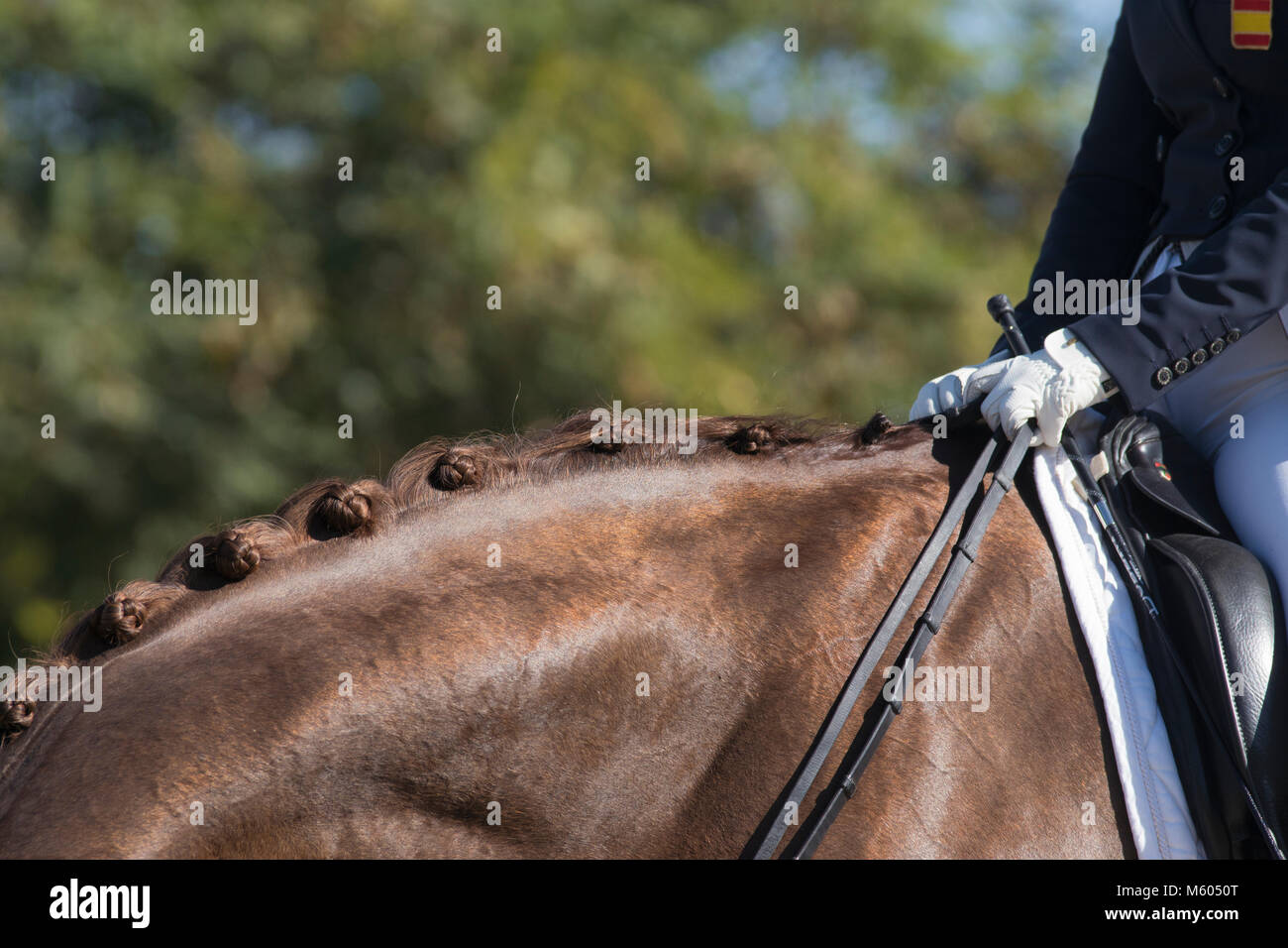 Detail of equine button braids in dressage - Stock Image