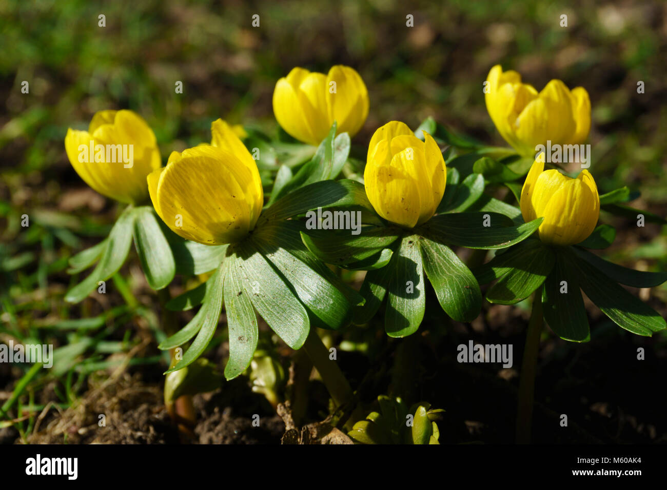 Spring Flowers Scottish Borders Stock Photos Spring Flowers