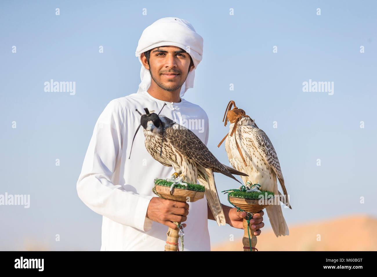 Saker Falcon (Falco cherrug). Falconer carrying a trained birds on their blocks. Abu Dhabi - Stock Image