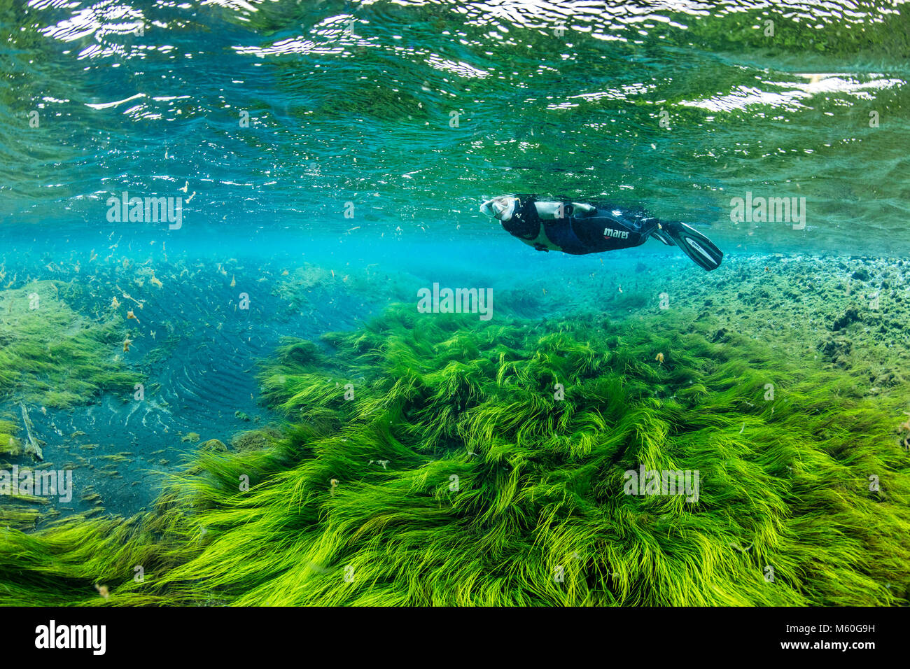 Snorkeling in Litla Sping, Iceland - Stock Image