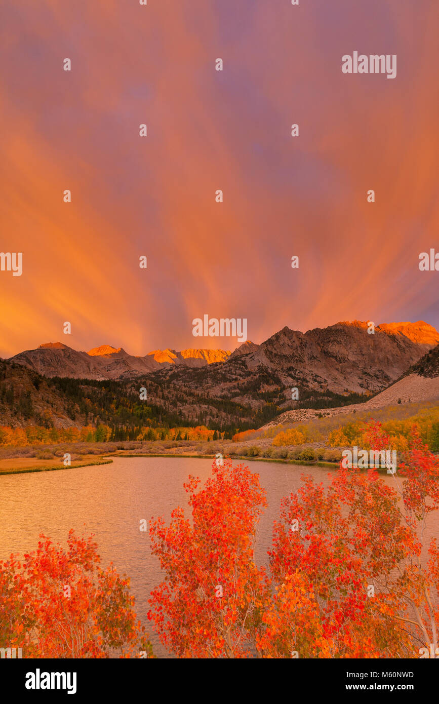 Sunrise, Aspen, Piute Crags, North Lake, Bishop Creek National Recreation Area, Inyo National Forest, Eastern Sierra, - Stock Image