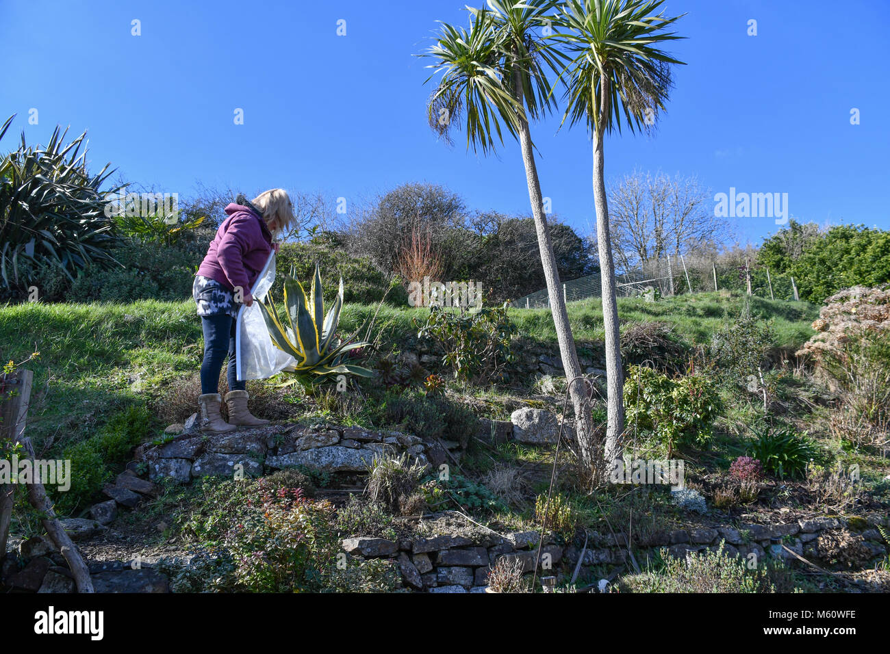 Mousehole, Cornwall, UK. 27th Feb 2018. UK Weather. In the far south west of Cornwall snow and ice rarely happens, - Stock Image