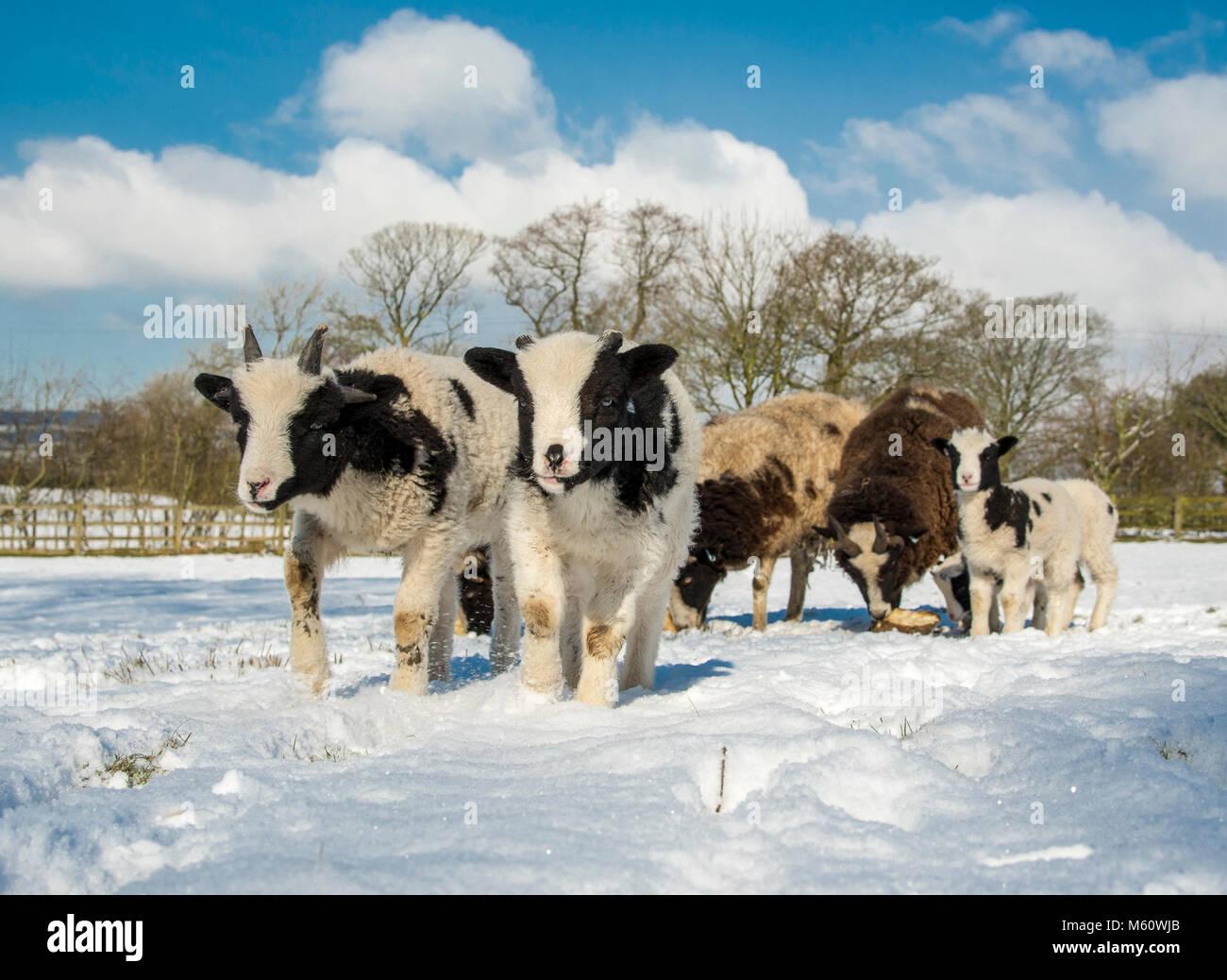 Preston, Lancashire, UK. 27th Feb, 2018.  Credit: John Eveson/Alamy Live News.  Preston, Lancashire, UK. 27th Feb, - Stock Image