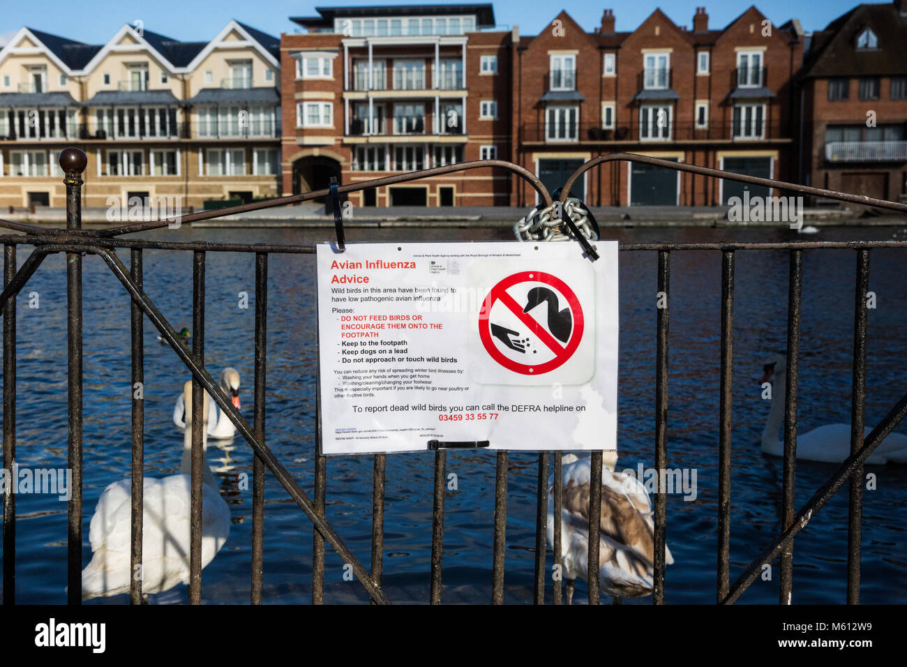 Windsor, UK. 27th February, 2018. An Avian Influenza Advice notice on display next to the river Thames following - Stock Image