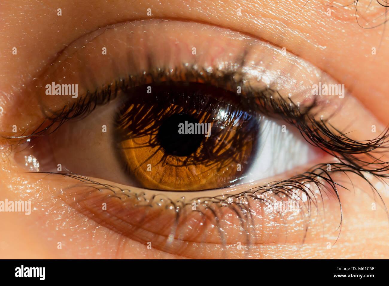 bright light in macro shot of beautiful brown eyes, male, caucasian - Stock Image