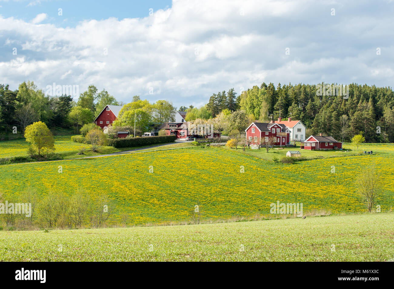Spring in the countryside of Småland, Sweden - Stock Image