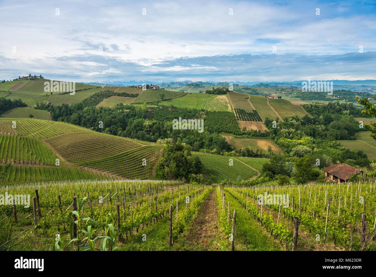 Vineyards of Langhe, Piedmont, UNESCO world heritage - Stock Image