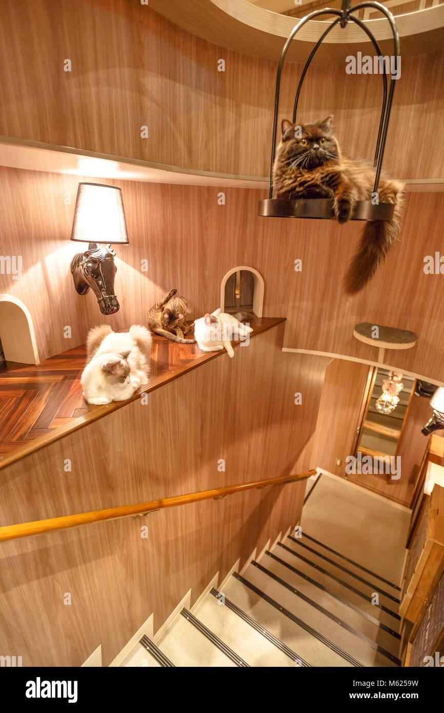 Tokyo Japan April 17 2017 Purebred Cats Inside Of Cat Cafe Mocha Stock Photo Alamy