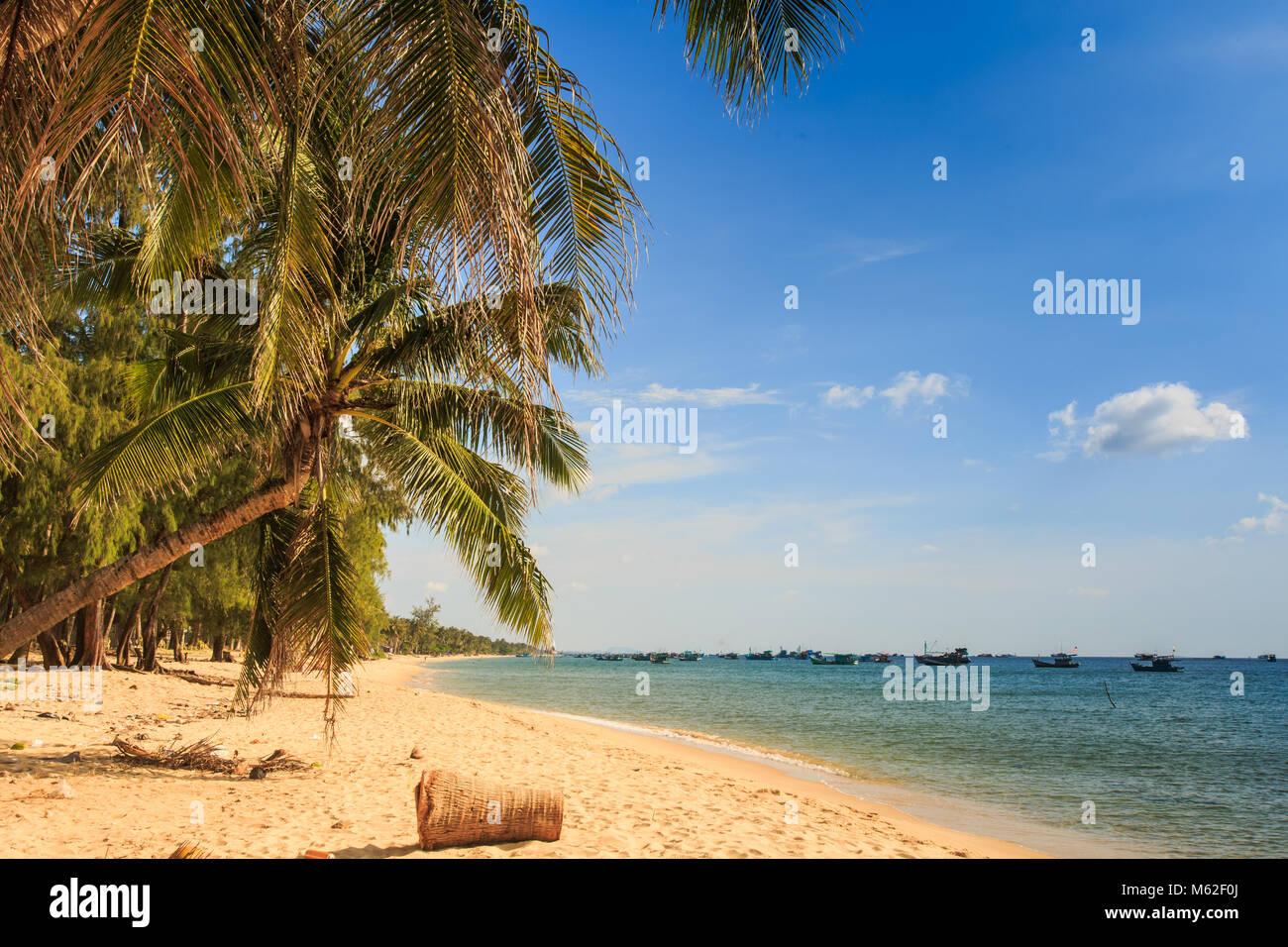 high palms bend over golden sand beach against azure sea blue sky under bright sunlight - Stock Image