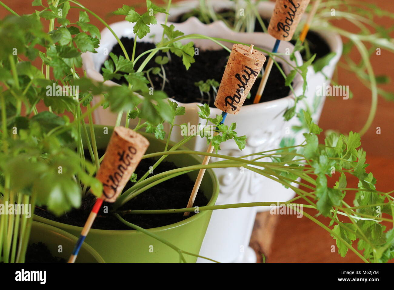 Plant Markers For Springtime Garden. Herbs Growing In Pots On Windowsill    Stock Image