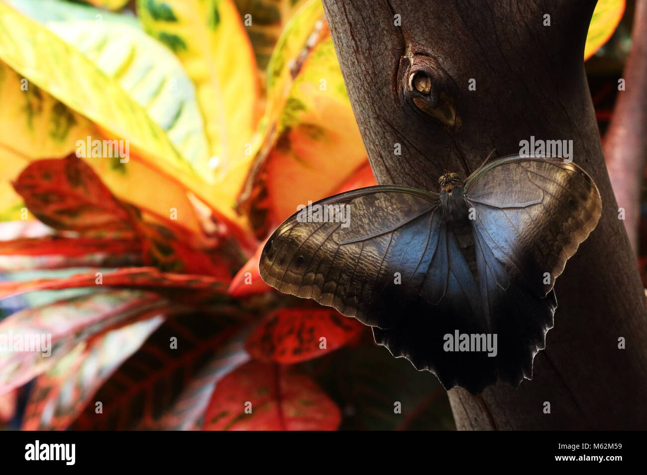 Butterfly sitting on a thin tree having extended wings with yellow flower in a background - Stock Image