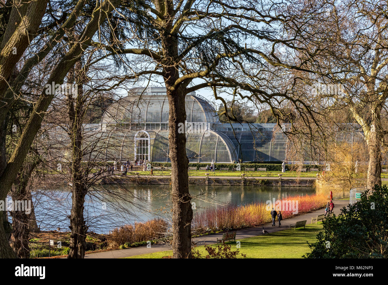 A couple walk along The Palm House Pond  with a glorious display of red  stemmed Cornus  in front of The Palm House - Stock Image