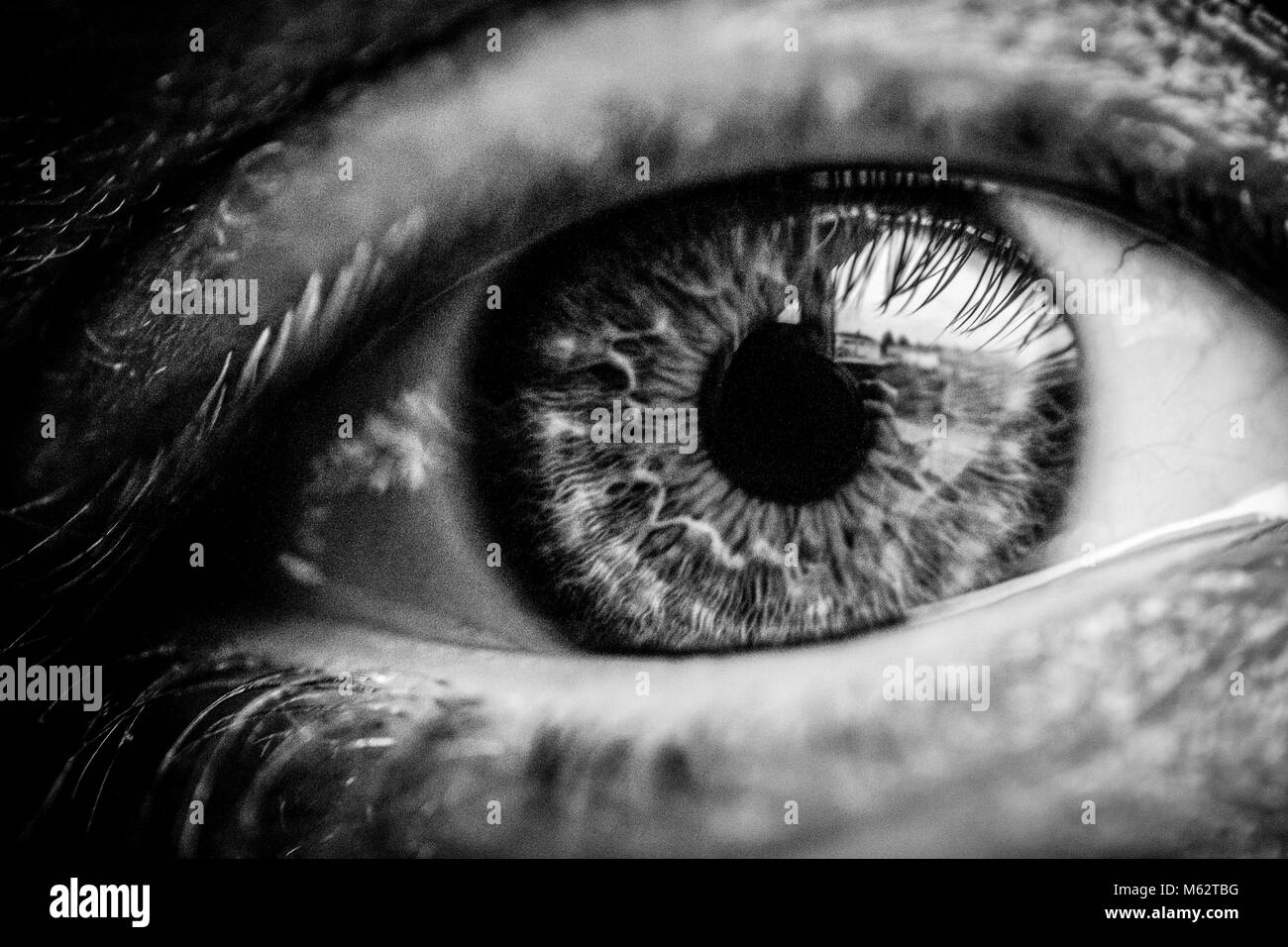Black and white macro close up of human eye looking at camera stock image