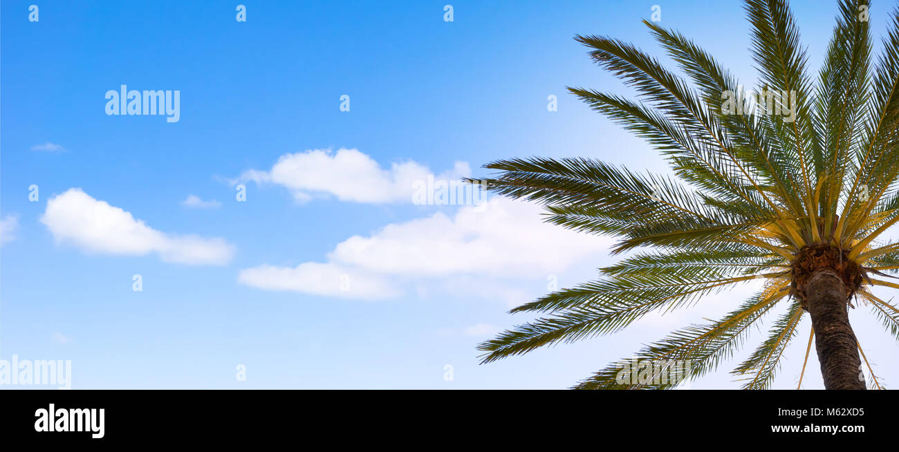 palm tree top from below against sun light - Stock Image