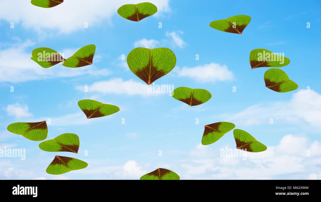 flying trefoils Stock Photo