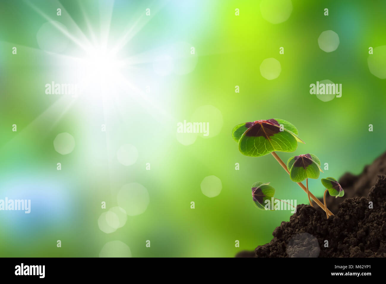 growing young plants in sunshine Stock Photo