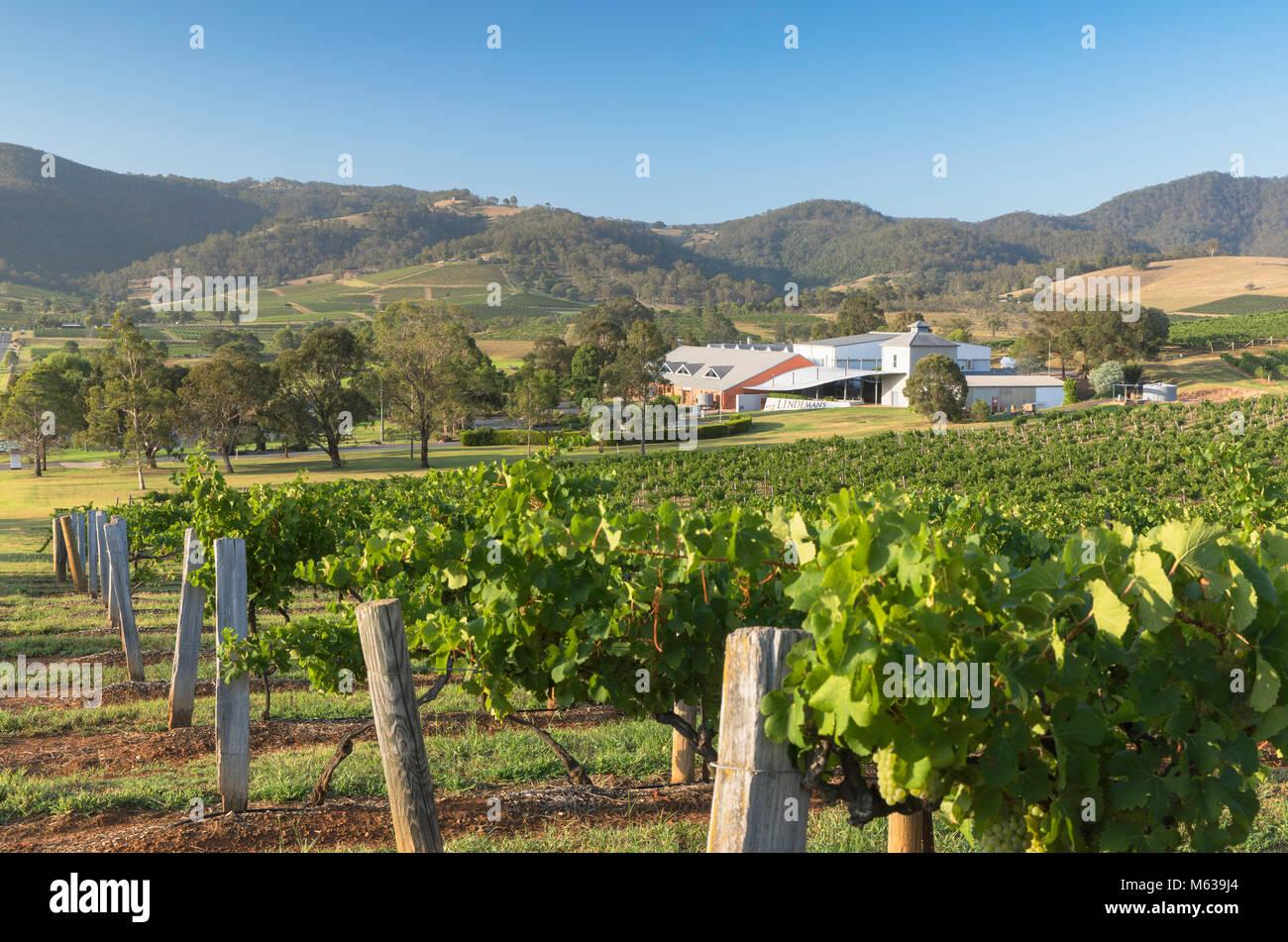 Ben Ean Wine Estate, Hunter Valley, New South Wales, Australia - Stock Image