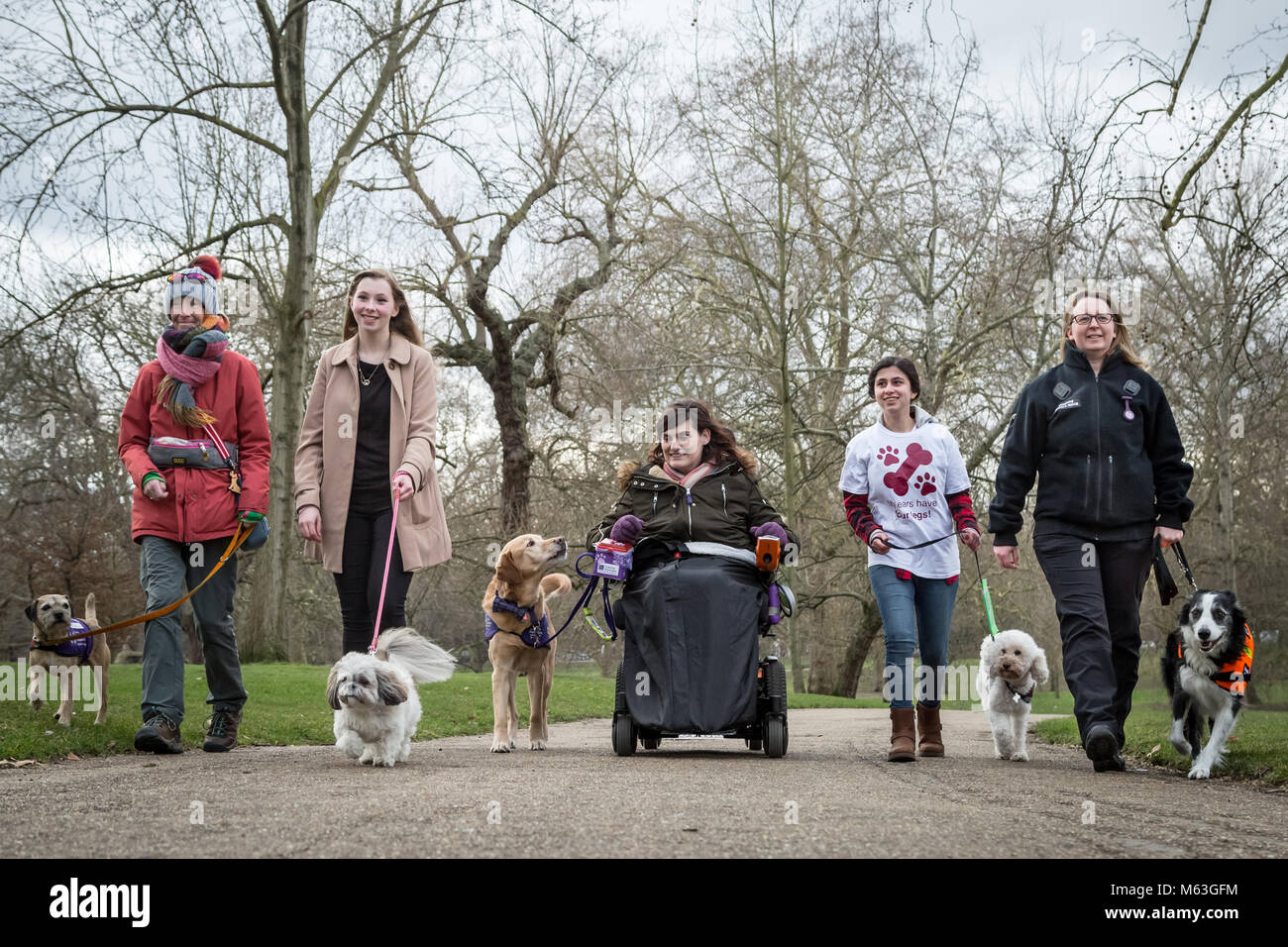 London, UK. 27th Feb, 2018. The Kennel Club photocall for the five finalists announced for the prestigious Crufts - Stock Image