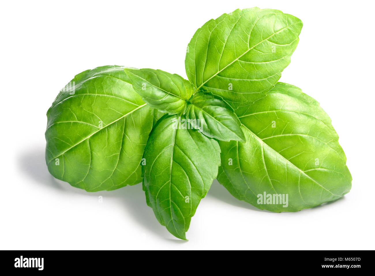 Basil leaves (Ocimum basilicum). Shadows separated, clipping paths: https://goo.gl/qQ88ZY - Stock Image