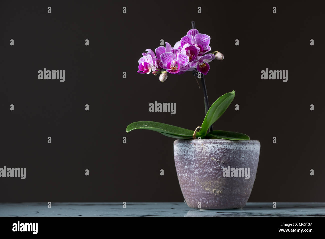 Small pink orchid phalaenopsis in a flower pot dark background small pink orchid phalaenopsis in a flower pot dark background mightylinksfo