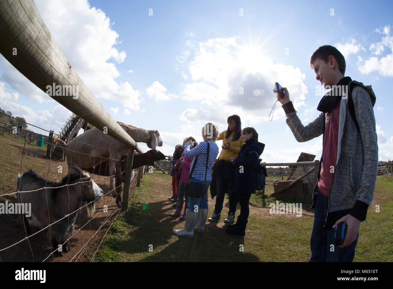 group of mixed age and gender children visiting farm, taking photos of the animals - Stock Image