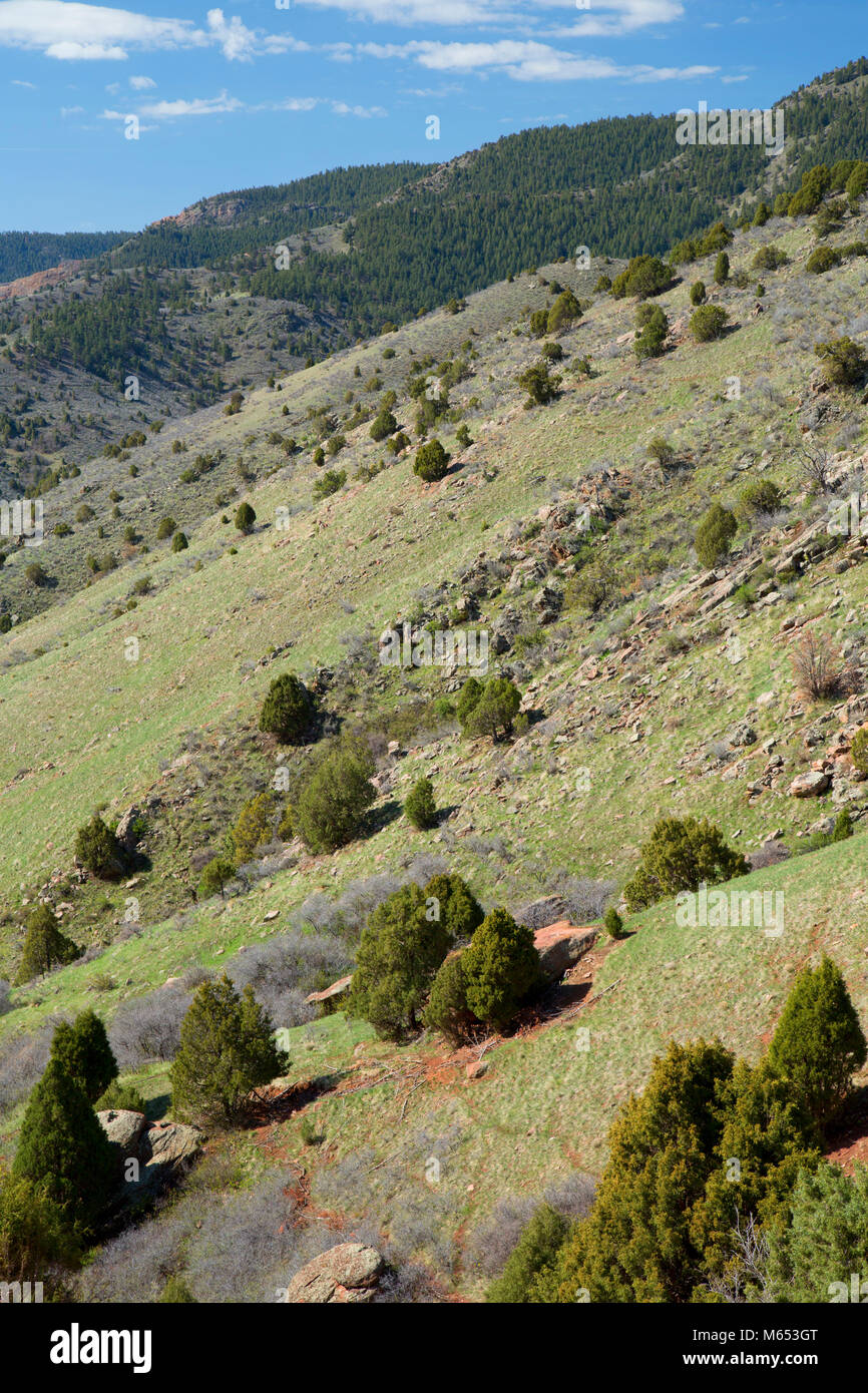 Front Range slope, Red Rocks Park, Jefferson County, Colorado Stock Photo