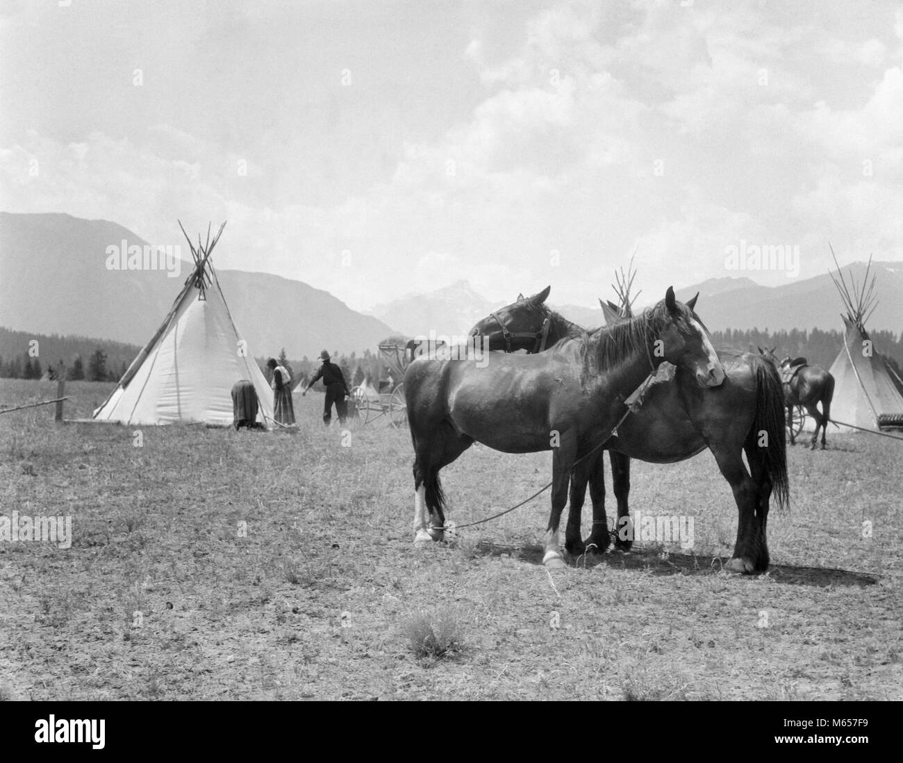 1920s TWO HORSES STANDING GROOMING EACH OTHER SIDE BY SIDE IN BLACKFOOT INDIAN VILLAGE BRITISH COLUMBIA CANADA  - Stock Image