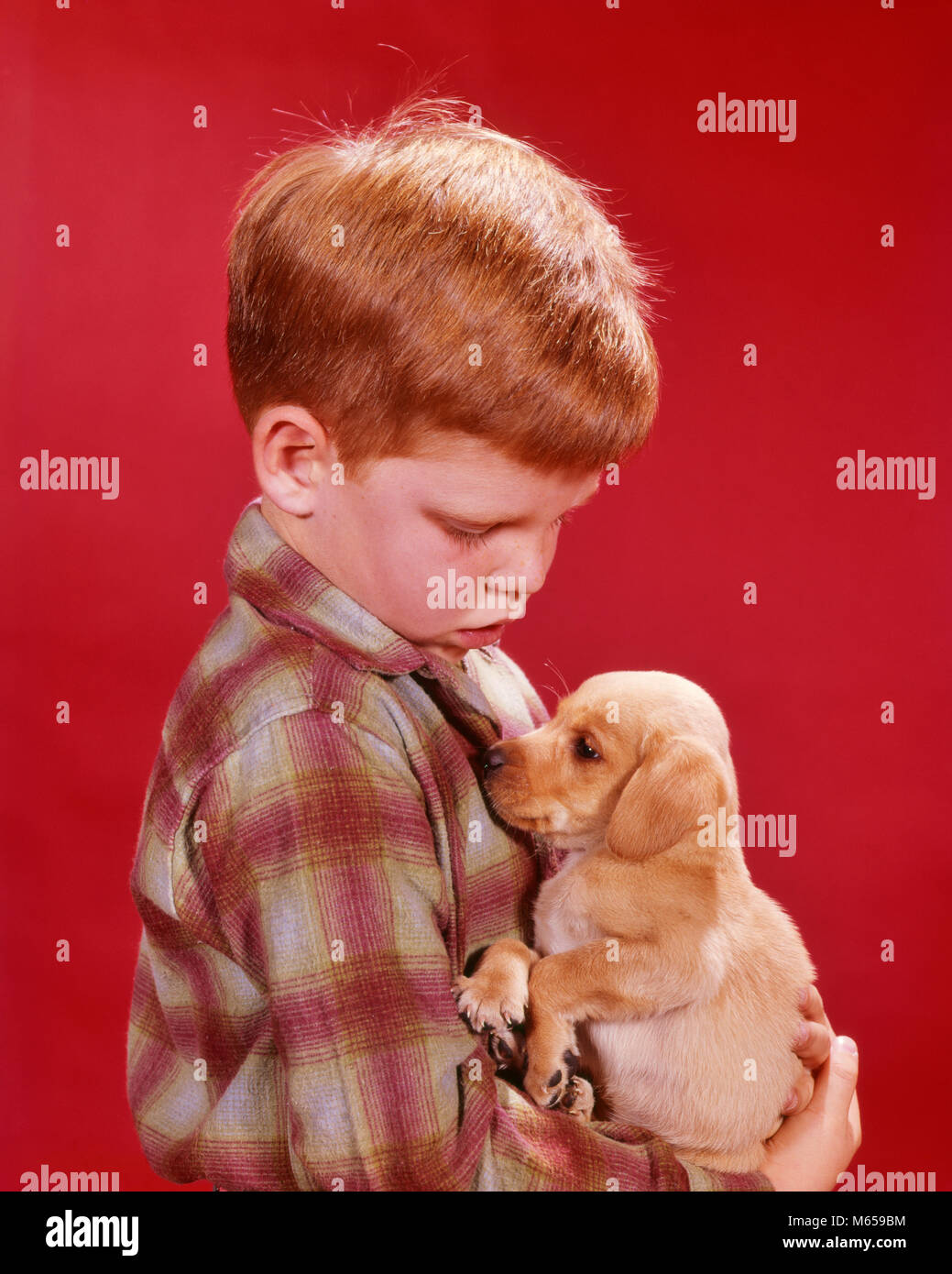 1960s SERIOUS BOY RED PLAID SHIRT RED HAIR HOLDING SMALL PUPPY DOG PET - kd1356 HAR001 HARS 7-9 YEARS ONE ANIMAL - Stock Image