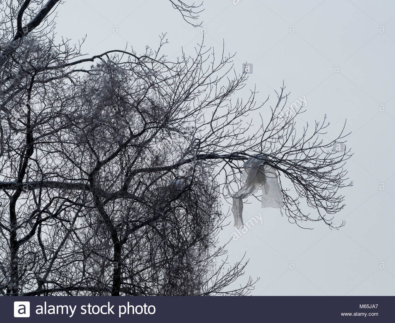 Plastic wrapping hanging in a tree - Stock Image