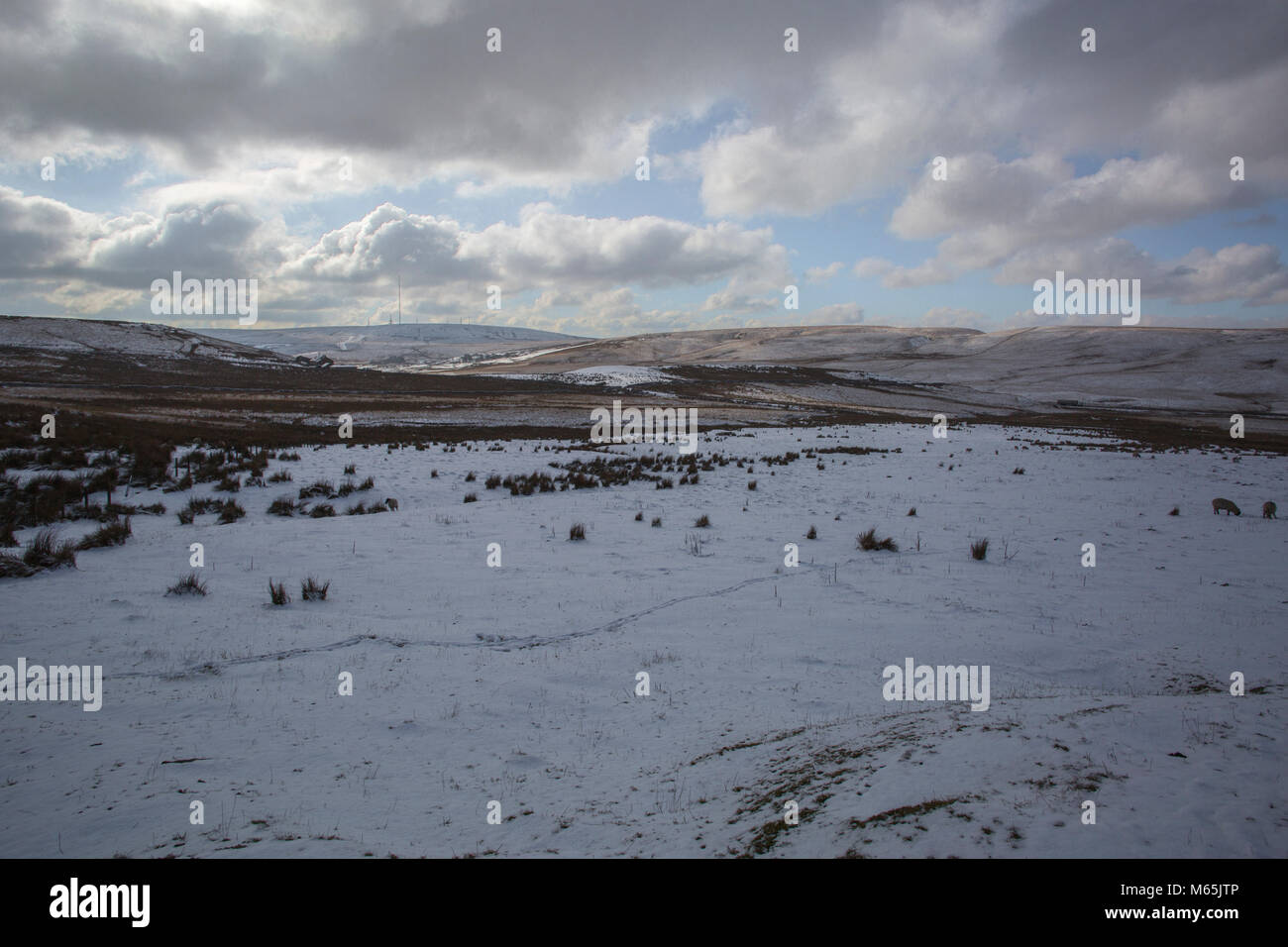 Darwen Moor and surroundings. Part of the West Pennine Moors a Site of Special Scientific Interest. - Stock Image