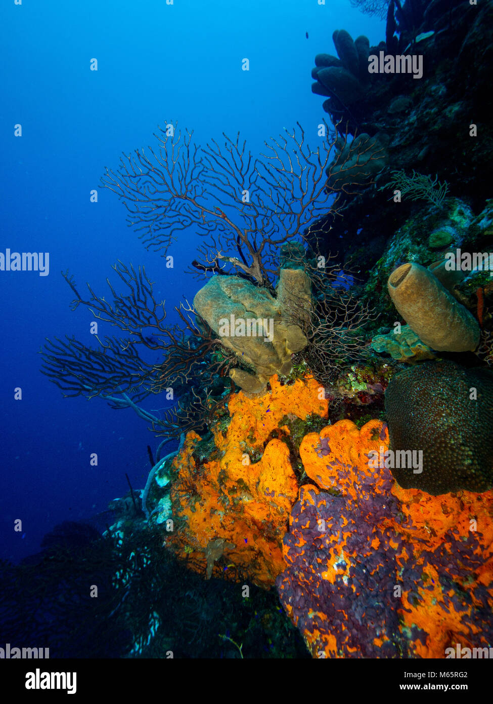 Coral wall with blue water background - Stock Image