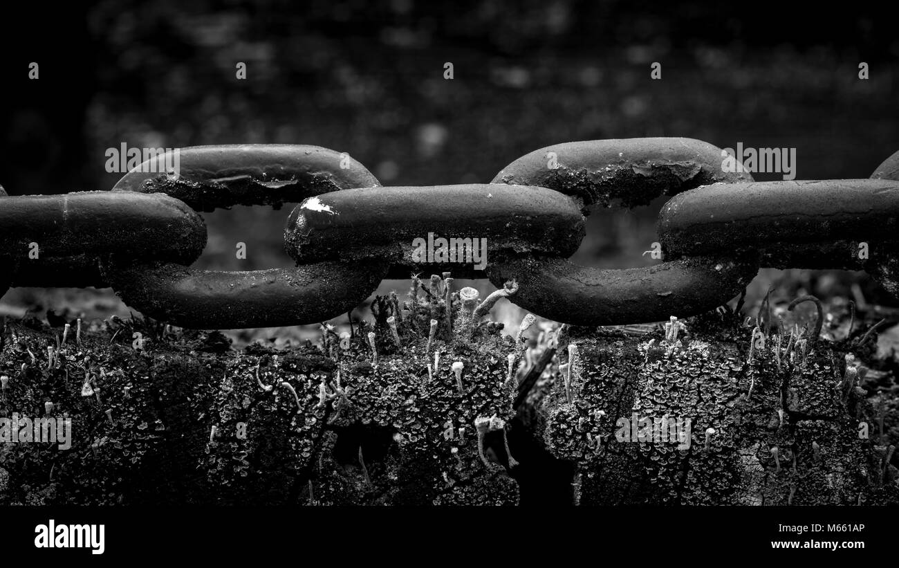 Chain links - Revelstoke Railway Museum - Canada, British Columbia, Revelstoke Stock Photo