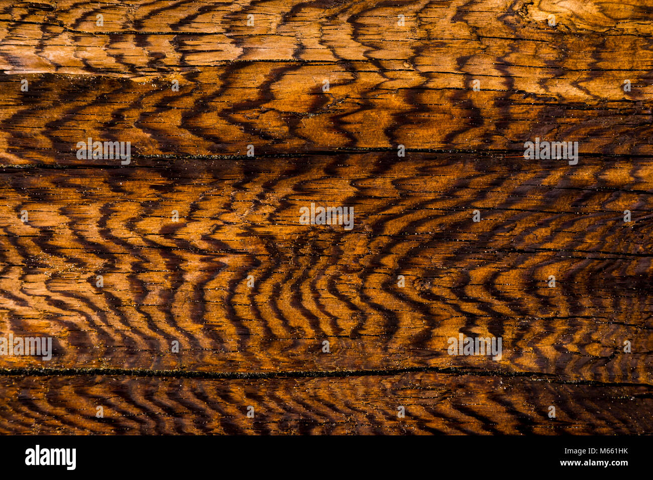 Detail of Driftwood - Washington, Fort Flagler State Park (Vertical or horizontal) Stock Photo