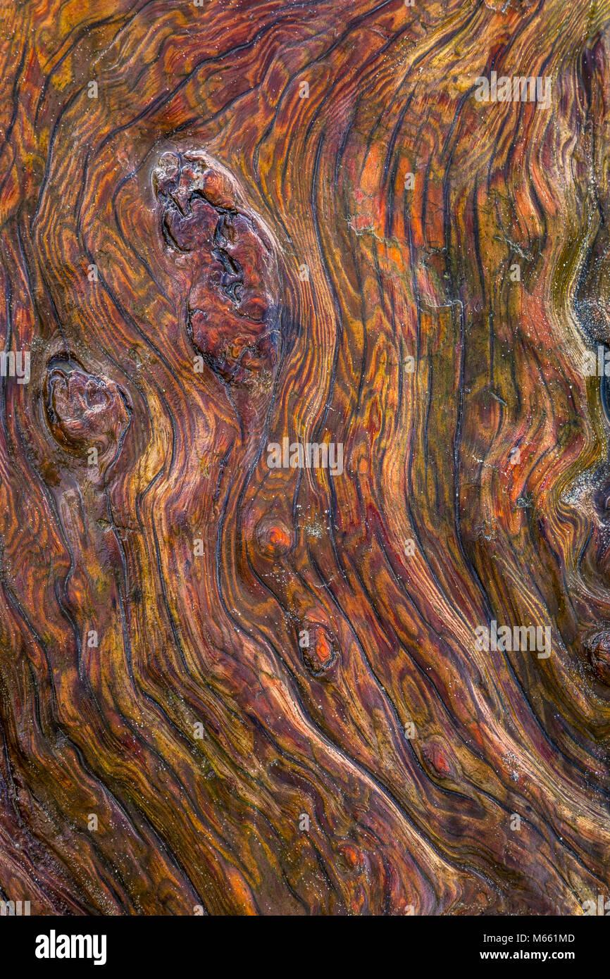 Detail of Driftwood - Washington, Fort Flagler State Park (Vertical or horizontal) - Stock Image