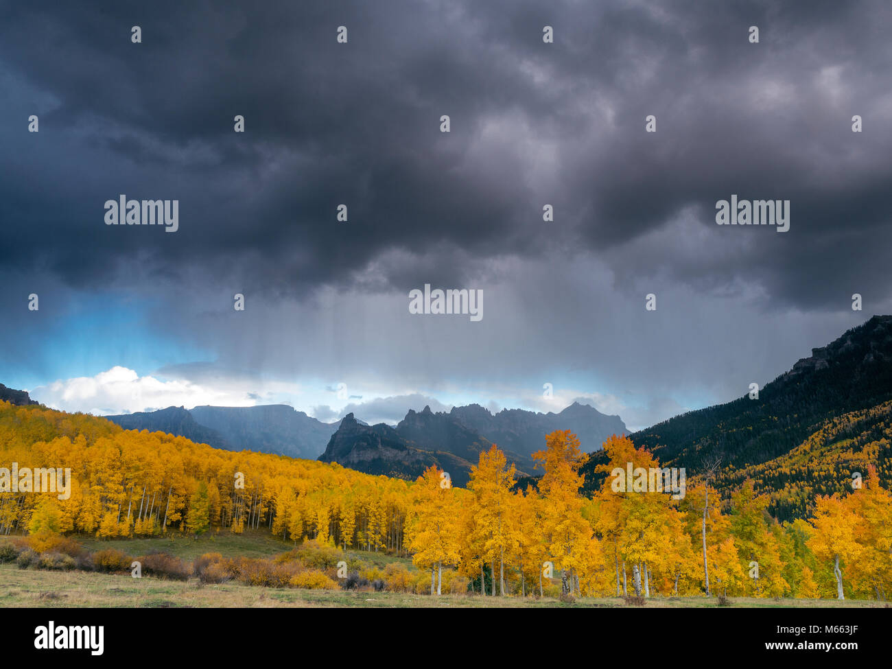 Approaching Storm, Aspens, Cimarron Ridge, Precipice Peak, Uncompahgre National Forest, Colorado - Stock Image